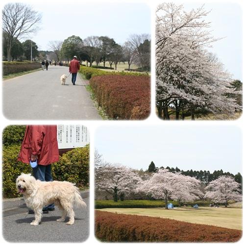 お花見1.jpg