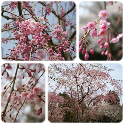 お花見6.jpg