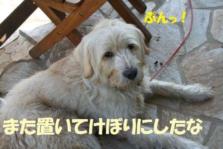 IMG_0904web.JPG