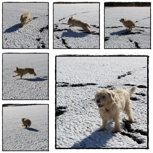 雪とモコ1.jpg