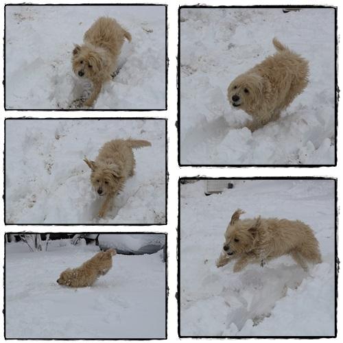 雪とモコ2.jpg